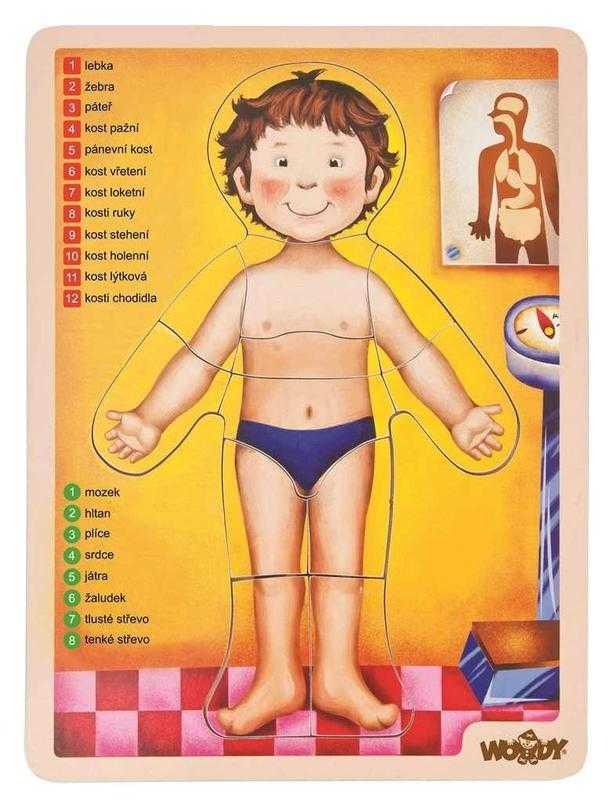Woody Drevené puzzle anatómia - ľudské telo